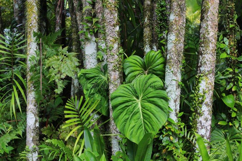 Ζούγκλα στοκ εικόνες