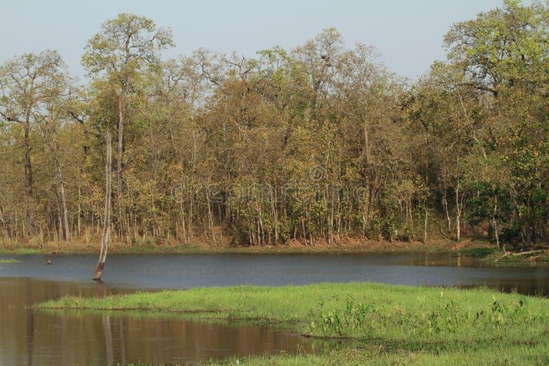 Ζούγκλα Chitwan Νεπάλ στοκ εικόνα με δικαίωμα ελεύθερης χρήσης