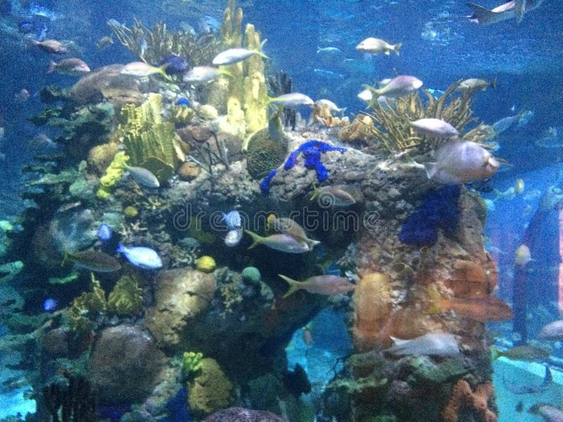 Ζωή θάλασσας στη NOLA στοκ φωτογραφία