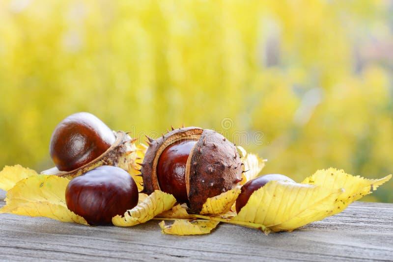 ζωή κάστανων φθινοπώρου α&kapp στοκ εικόνα με δικαίωμα ελεύθερης χρήσης