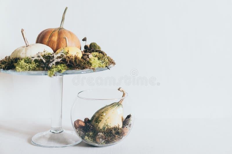 Ζωή με κολοκύθες και βρύα σε γυάλινο βάζο σε λευκό φόντο στοκ φωτογραφίες με δικαίωμα ελεύθερης χρήσης
