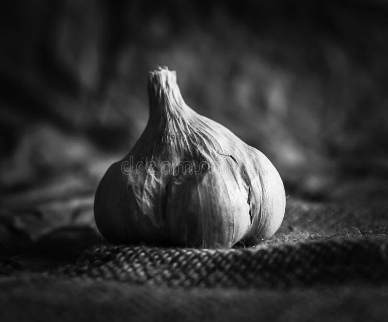 ζωή σκόρδου ακόμα στοκ φωτογραφίες με δικαίωμα ελεύθερης χρήσης
