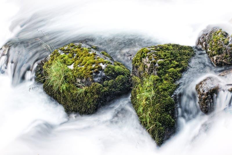 Ζωή στους βράχους ποταμών στοκ φωτογραφία