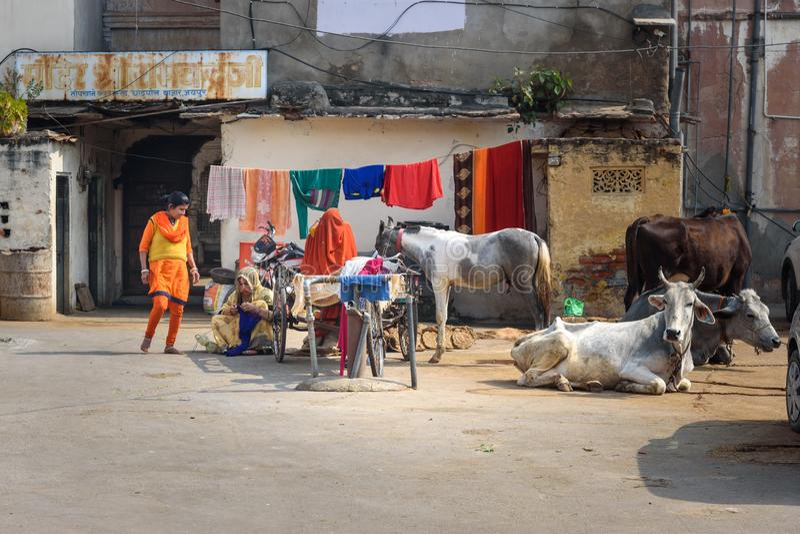 Ζωή στους δρόμους Γυναίκες, αγελάδες και άλογα στην οδό στο Jaipur Rajasthan r στοκ εικόνες