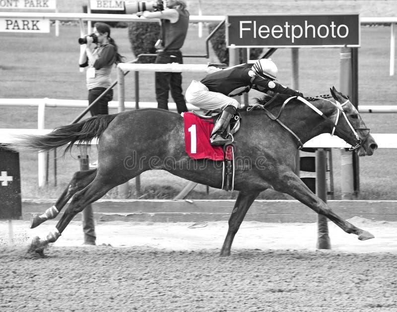 Ζωή στο άλογο κούρσας νίκης σφαγείων στο πάρκο Belmont στοκ εικόνες