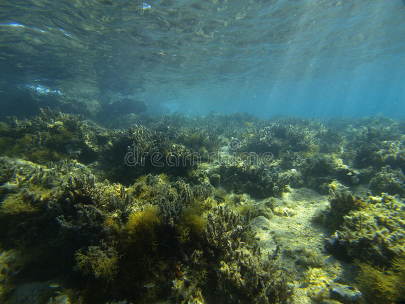 ζωή υποβρύχια στοκ φωτογραφία