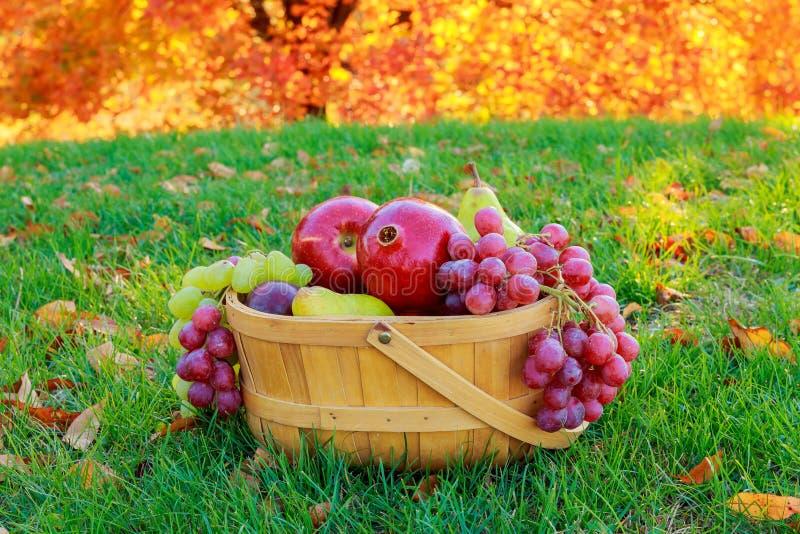Ζωή φθινοπώρου ακόμα με τα φρούτα σε ένα ψάθινο καλάθι και τα σταφύλια αχλαδιών μήλων στοκ εικόνες με δικαίωμα ελεύθερης χρήσης