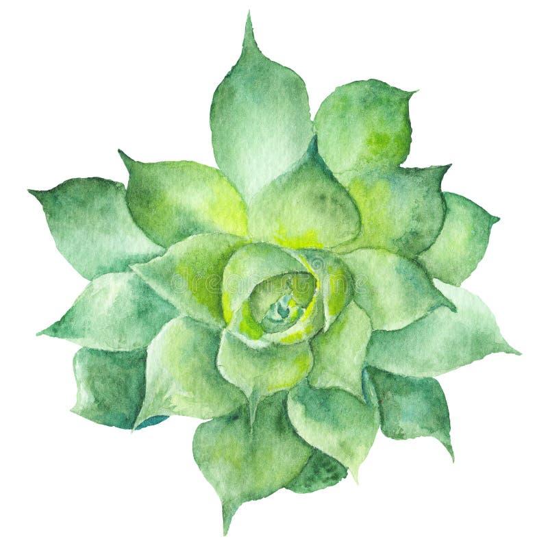 Ζωγραφική Sukkulent Watercolor ελεύθερη απεικόνιση δικαιώματος