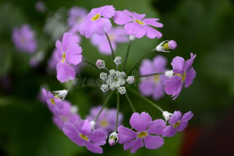 Ζωηρά χρώματα της φύσης στοκ εικόνα με δικαίωμα ελεύθερης χρήσης