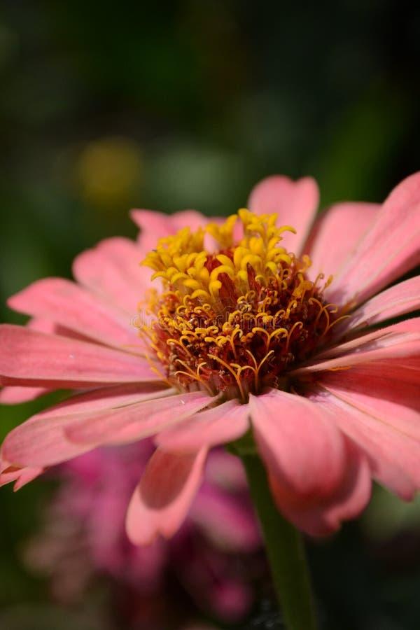 Ζωηρά χρώματα της φύσης στοκ φωτογραφία με δικαίωμα ελεύθερης χρήσης