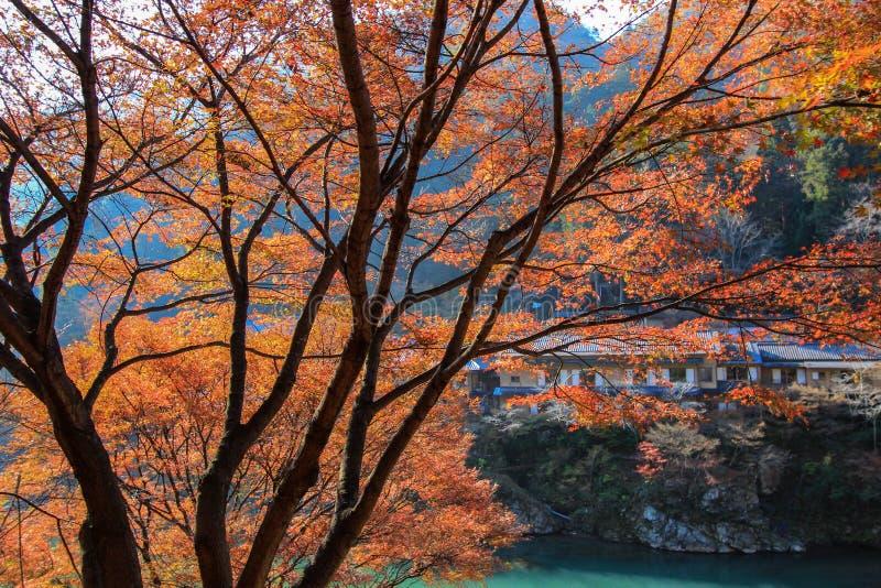 Ζωηρόχρωμα δέντρα φθινοπώρου σε μια όχθη ποταμού απέναντι από τις κατοικήσιμες περιοχές στοκ εικόνες με δικαίωμα ελεύθερης χρήσης