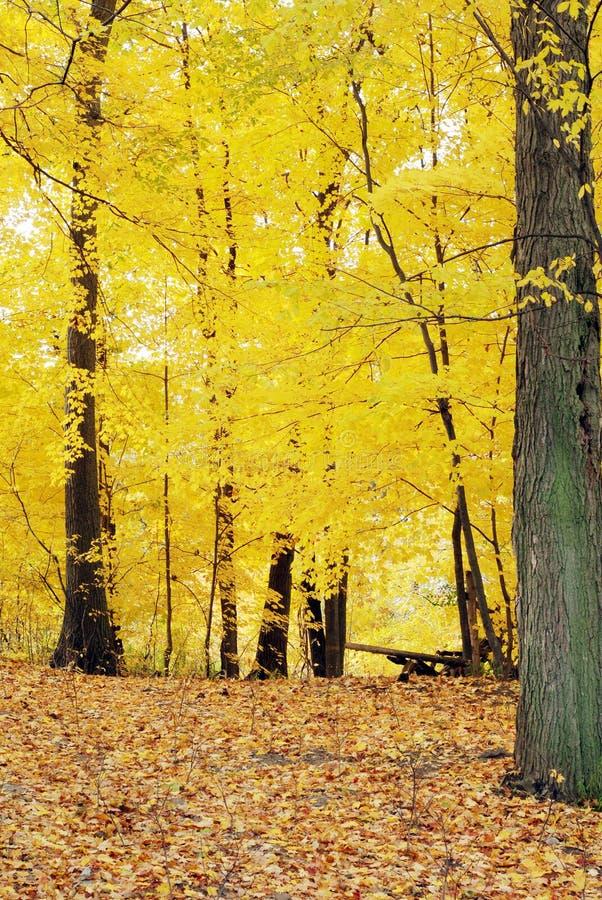 ζωηρόχρωμα δέντρα κίτρινα στοκ φωτογραφία