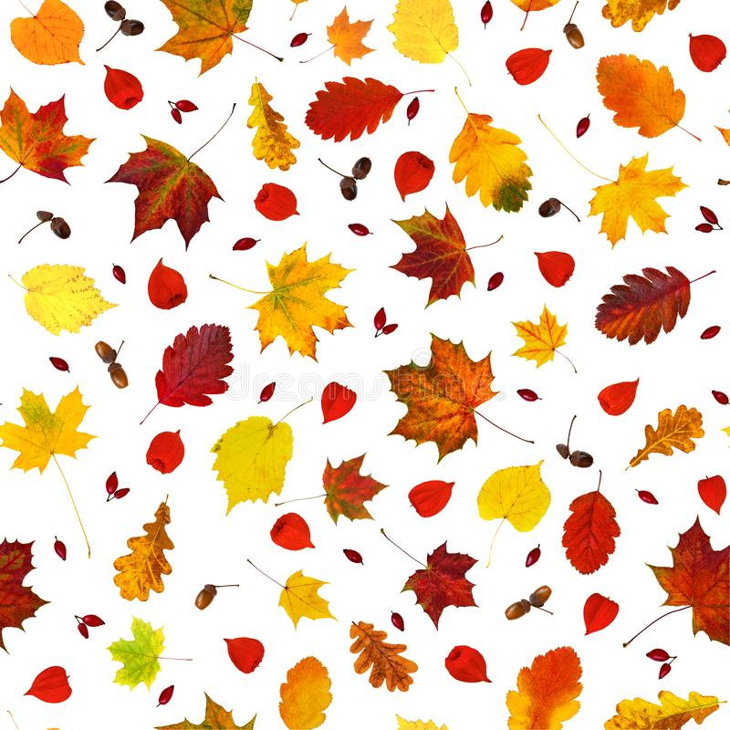 Ζωηρόχρωμα διάφορα φύλλα πτώσης, alkekengi Physalis φαναριών physalis, σκυλί-ροδαλά φρούτα και άνευ ραφής σχέδιο κολάζ βελανιδιών στοκ εικόνες με δικαίωμα ελεύθερης χρήσης