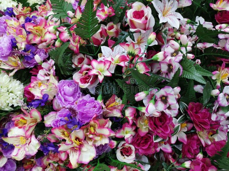 Ζωηρόχρωμα διακοσμητικά λουλούδια στοκ φωτογραφίες