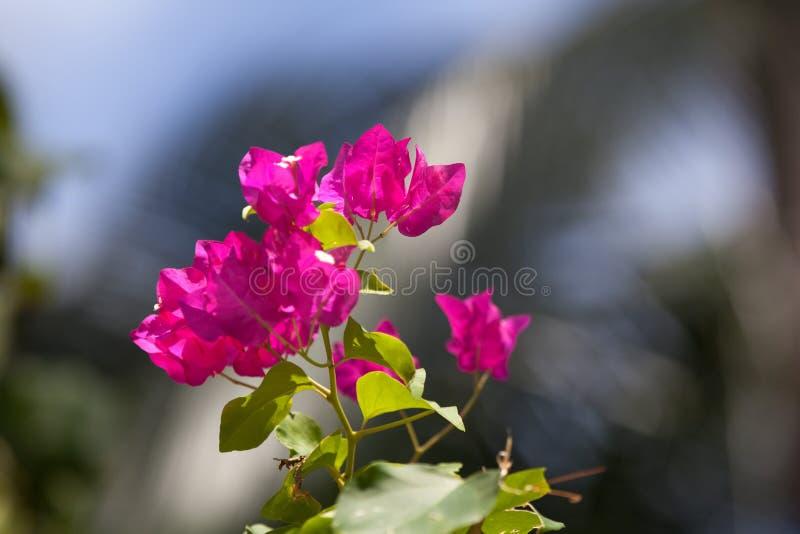 Ζωηρόχρωμα εξωτικά λουλούδια σε έναν κήπο στοκ φωτογραφία