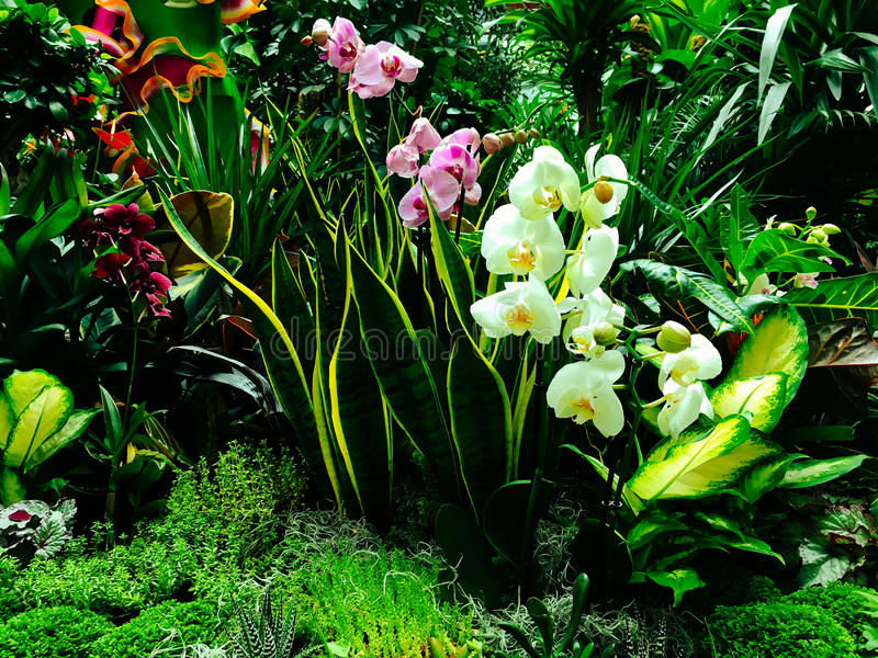 Ζωηρόχρωμα εξωτικά λουλούδια στον κήπο στοκ φωτογραφίες με δικαίωμα ελεύθερης χρήσης
