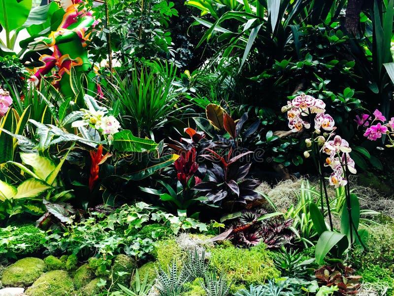 Ζωηρόχρωμα εξωτικά λουλούδια στον κήπο στοκ φωτογραφία με δικαίωμα ελεύθερης χρήσης