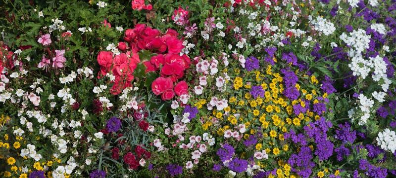 Ζωηρόχρωμα θερινά λουλούδια σε ένα κρεβάτι στοκ φωτογραφία με δικαίωμα ελεύθερης χρήσης