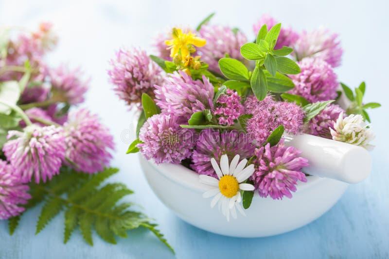 Ζωηρόχρωμα ιατρικά λουλούδια και χορτάρια στο κονίαμα στοκ εικόνες