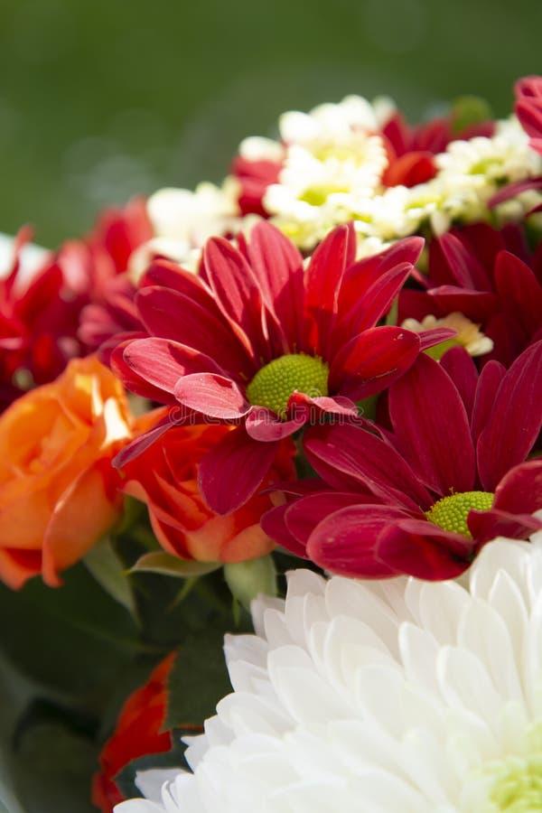 Ζωηρόχρωμα λουλούδια ανθοδεσμών άνοιξη με τα τριαντάφυλλα, το χρυσάνθεμο και camomile Όμορφο δώρο λουλουδιών Πρότυπο για το σχέδι στοκ φωτογραφία
