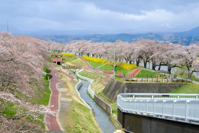 Ζωηρόχρωμα λουλούδια και δέντρα κερασιών στο πάρκο κατά μήκος των όχθεων ποταμού Shiroishi που βλέπουν από τη γέφυρα Miyagi, Toho στοκ εικόνες