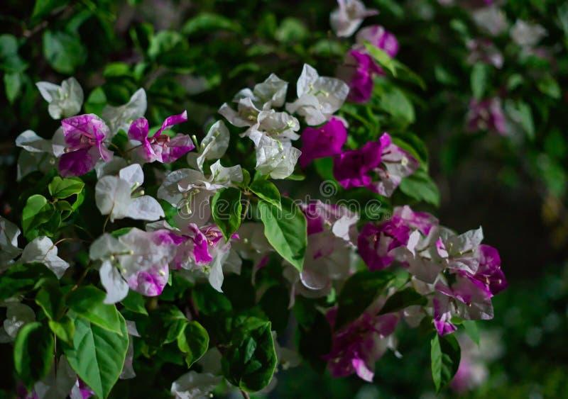 Ζωηρόχρωμα λουλούδια σκηνής νύχτας στοκ εικόνες