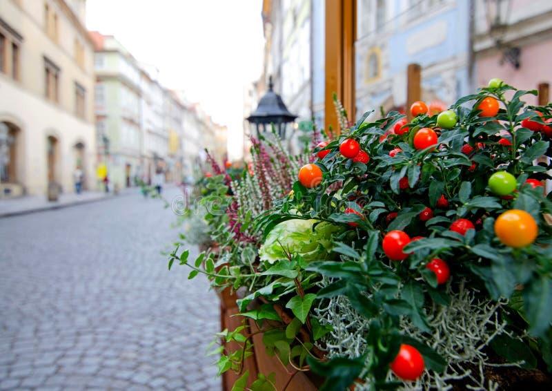 Ζωηρόχρωμα λουλούδια στο θερινό πεζούλι του εστιατορίου που αγνοεί την παλαιά οδό της Πράγας, Δημοκρατία της Τσεχίας στοκ εικόνες