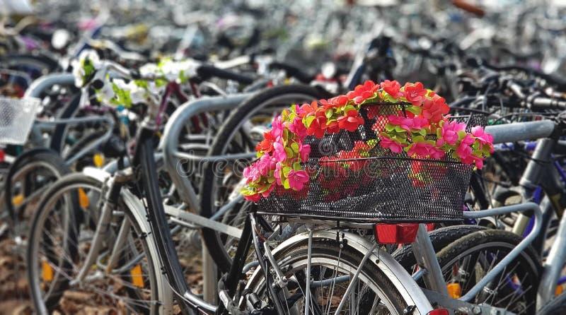 Ζωηρόχρωμα λουλούδια στο χώρο στάθμευσης ποδηλάτων στοκ εικόνες