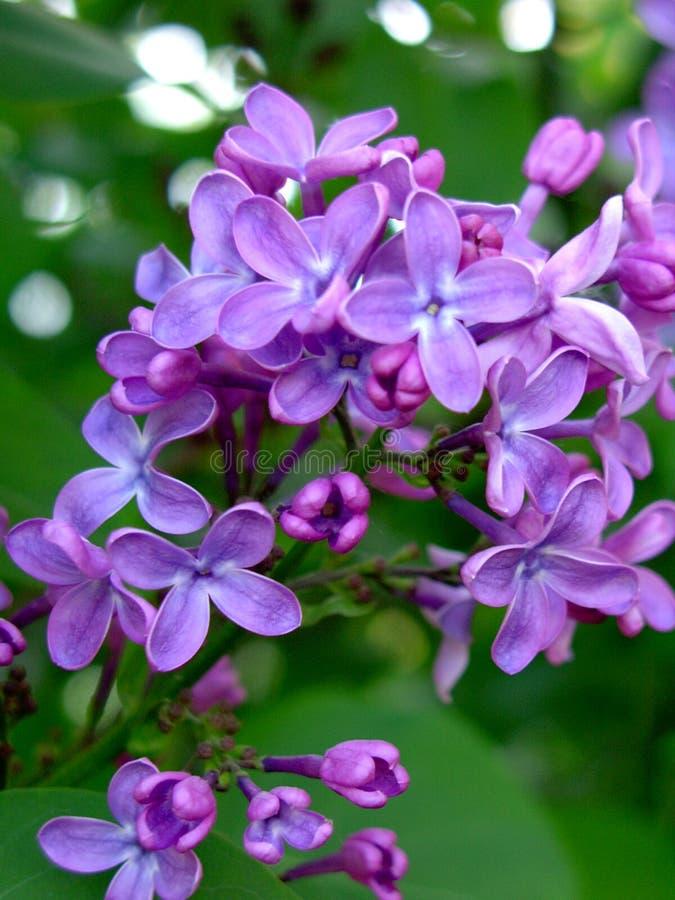 ζωηρόχρωμα λουλούδια στοκ εικόνα