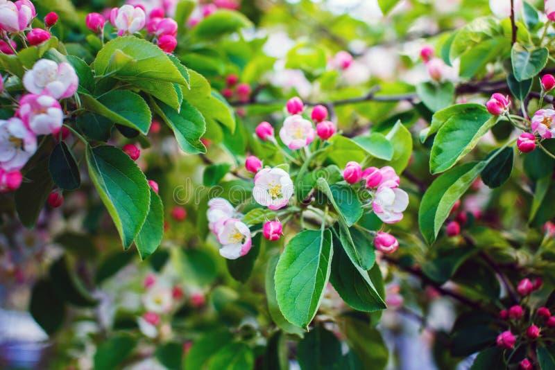 ζωηρόχρωμα λουλούδια wildlife στοκ φωτογραφία με δικαίωμα ελεύθερης χρήσης