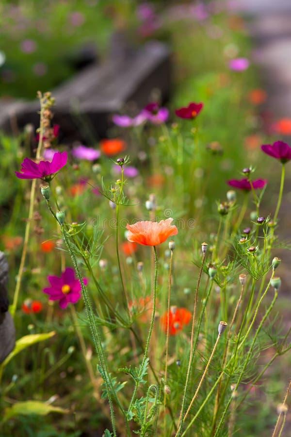 Ζωηρόχρωμα λουλούδια την άνοιξη στοκ εικόνες