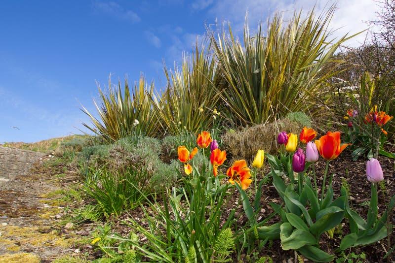 Ζωηρόχρωμα λουλούδια τουλιπών στη βουνοπλαγιά στην πόλη θάλασσας στοκ εικόνα με δικαίωμα ελεύθερης χρήσης