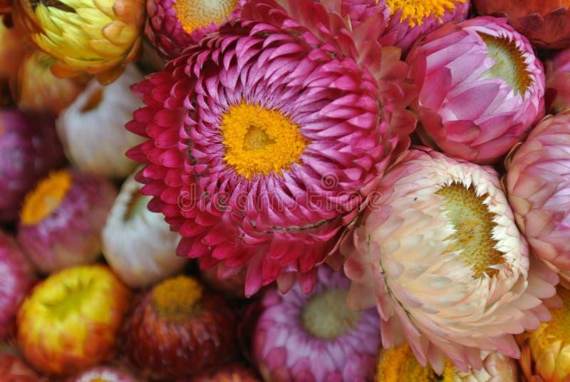 Ζωηρόχρωμα λουλούδια τόσο γλυκά στοκ φωτογραφία με δικαίωμα ελεύθερης χρήσης