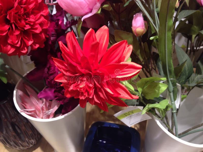 ζωηρόχρωμα λουλούδια στοκ εικόνες