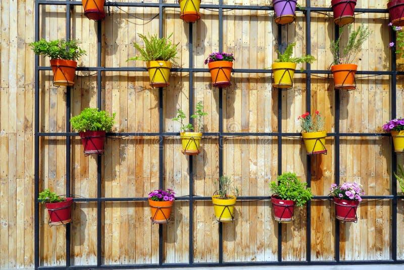 Ζωηρόχρωμα δοχεία λουλουδιών στον ξύλινο τοίχο στοκ φωτογραφίες