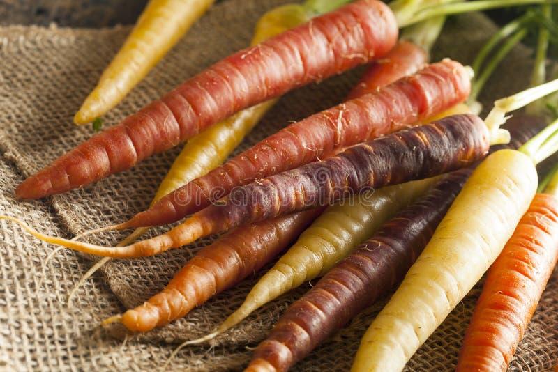 Ζωηρόχρωμα πολυ χρωματισμένα ακατέργαστα καρότα στοκ φωτογραφίες με δικαίωμα ελεύθερης χρήσης