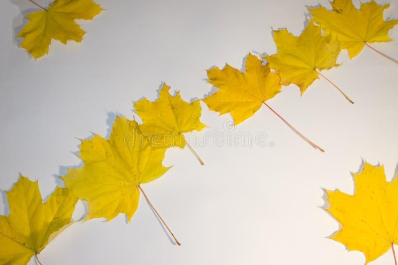 Ζωηρόχρωμα πράσινα, πορτοκαλιά και κίτρινα φύλλα rapevine το φθινόπωρο Αναδρομικά φωτισμένος από έναν ήλιο το απόγευμα Ρομαντικό  στοκ εικόνα με δικαίωμα ελεύθερης χρήσης