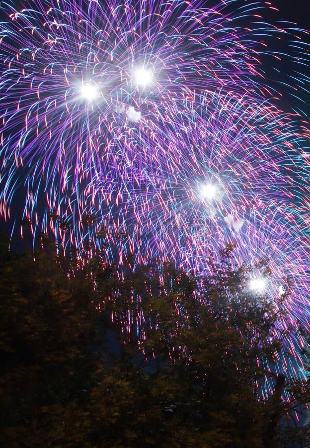 Ζωηρόχρωμα πυροτεχνήματα στις διακοπές επάνω από τα δέντρα στοκ εικόνες