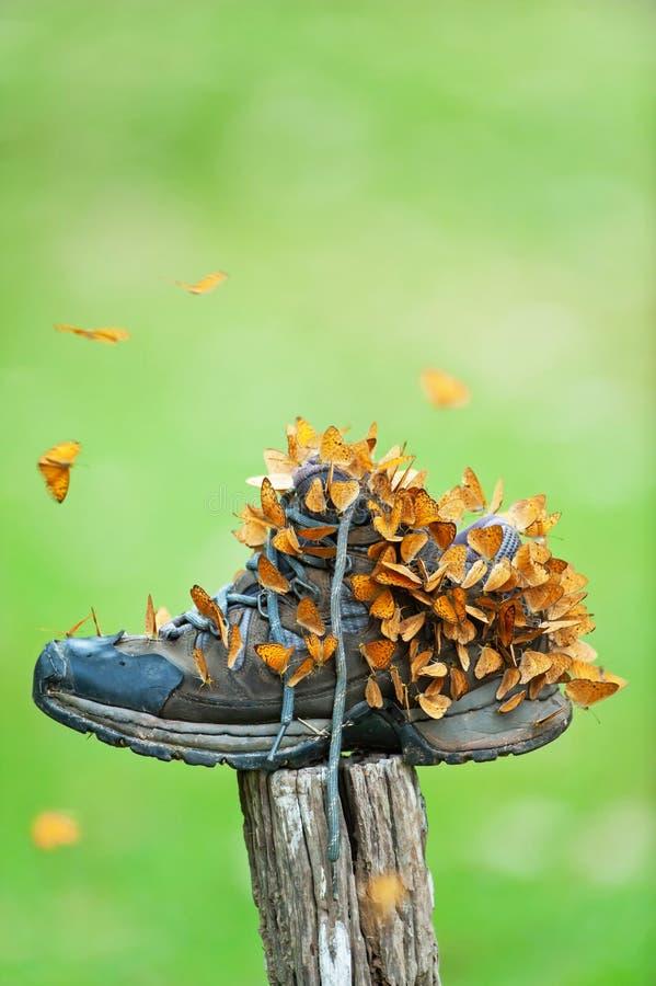 Ζωηρόχρωμα σμήνοι της μικρής τροφής πεταλούδων λεοπαρδάλεων με το παπούτσι πεζοπορίας το καλοκαίρι στοκ φωτογραφία με δικαίωμα ελεύθερης χρήσης