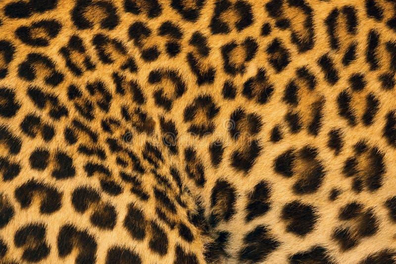 Ζωηρόχρωμα σχέδια και δέρμα λεοπαρδάλεων στοκ φωτογραφία με δικαίωμα ελεύθερης χρήσης