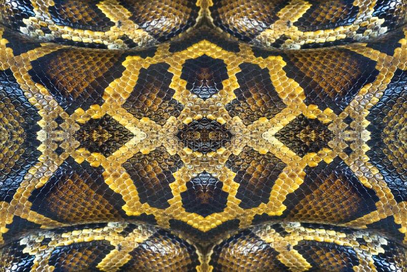 Ζωηρόχρωμα σχέδια boa του δέρματος στοκ φωτογραφία με δικαίωμα ελεύθερης χρήσης