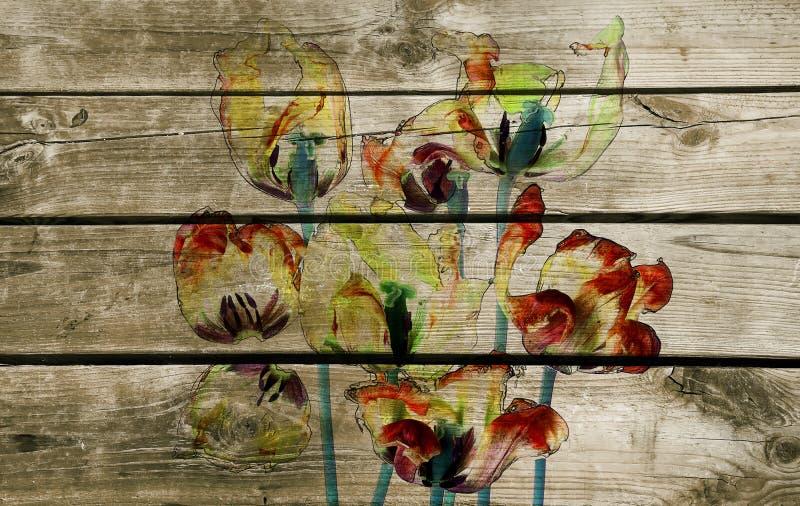 Ζωηρόχρωμα τουλίπες και πέταλα απεικόνιση αποθεμάτων