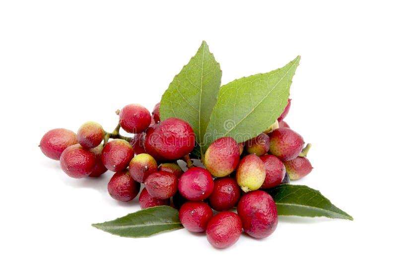 Ζωηρόχρωμα φρούτα και φύλλα του δέντρου φύλλων κάρρυ στοκ φωτογραφία