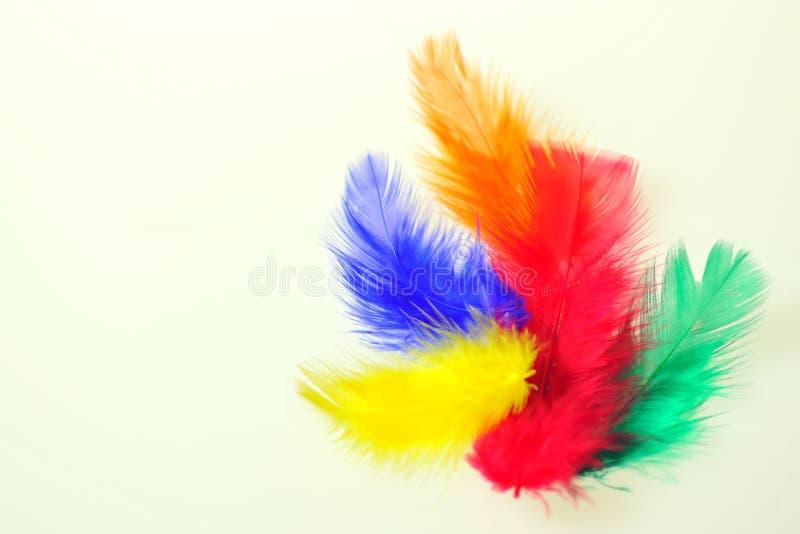 ζωηρόχρωμα φτερά στοκ εικόνα με δικαίωμα ελεύθερης χρήσης