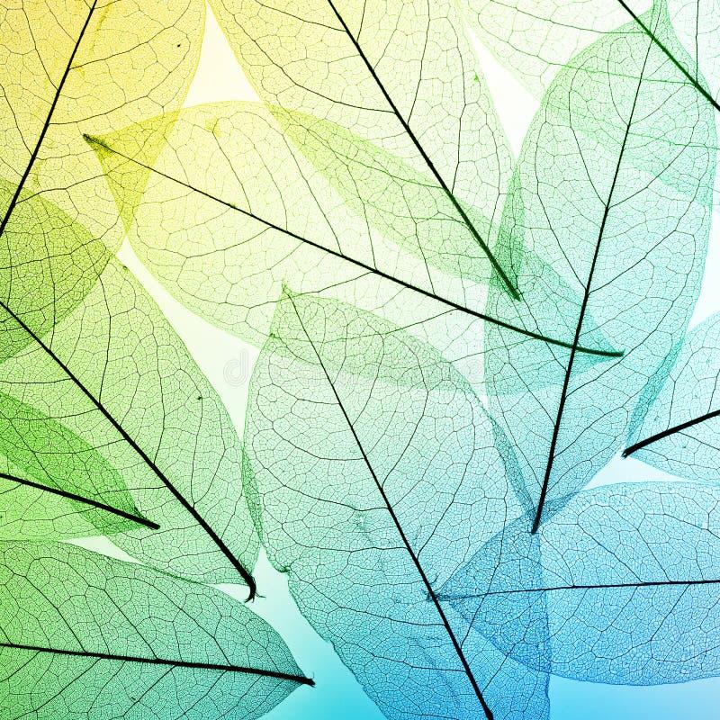 ζωηρόχρωμα φύλλα ανασκόπη&sigm σύσταση άδειας στοκ εικόνα