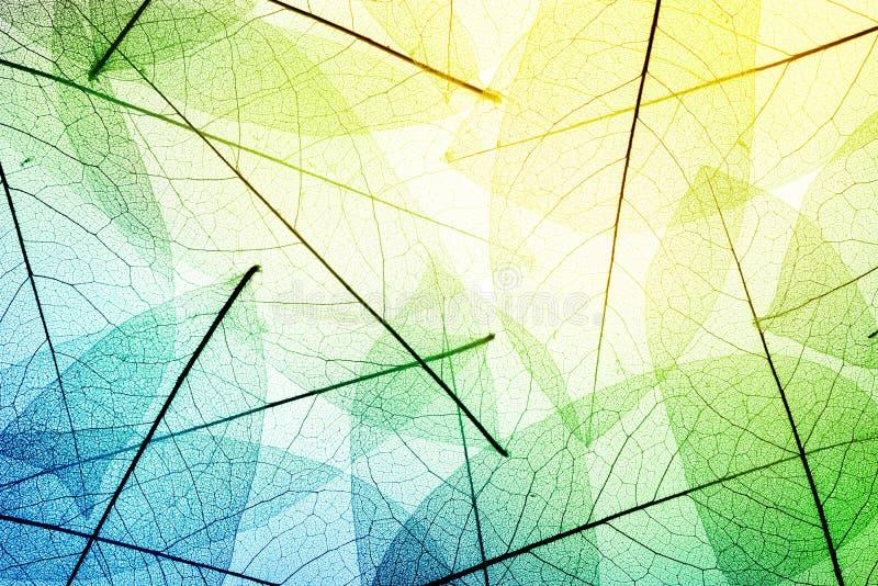 ζωηρόχρωμα φύλλα ανασκόπη&sigm σύσταση άδειας στοκ εικόνα με δικαίωμα ελεύθερης χρήσης