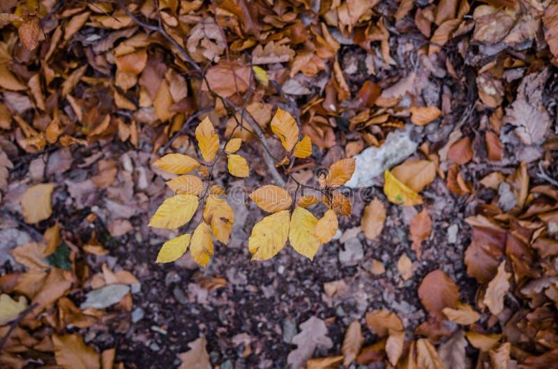 Ζωηρόχρωμα φύλλα στο έδαφος κοντά ή μετά από στο ηλιοβασίλεμα στοκ εικόνες με δικαίωμα ελεύθερης χρήσης