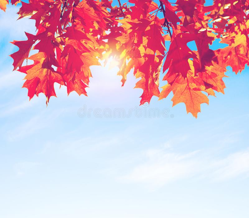 Ζωηρόχρωμα φύλλα φθινοπώρου ενάντια στο μπλε ουρανό εικόνα που τονίζεται στοκ εικόνα