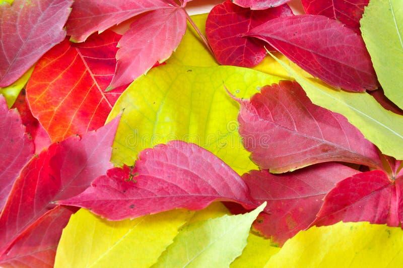 Ζωηρόχρωμα φύλλα φθινοπώρου στο έδαφος στοκ εικόνες