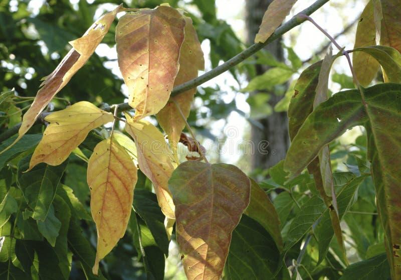 Ζωηρόχρωμα φύλλα φθινοπώρου στο κρύο μπλε νερό με τις αντανακλάσεις ήλιων, χρυσοί κυματισμοί Η έννοια του φθινοπώρου έχει έρθει στοκ φωτογραφία